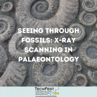 Seeing Through Fossils: X-Ray Scanning in Palaeontology